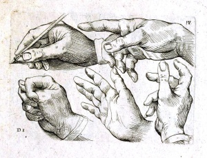 medical anatomy hands